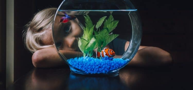 These Are The Best Fish for Pets