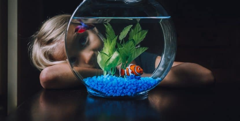 Best Fish for Pets