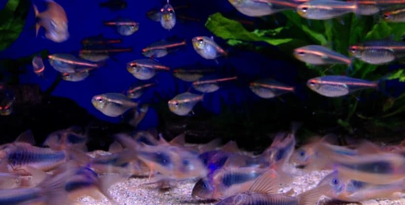 How Many Fish In A 20-gallon Tank