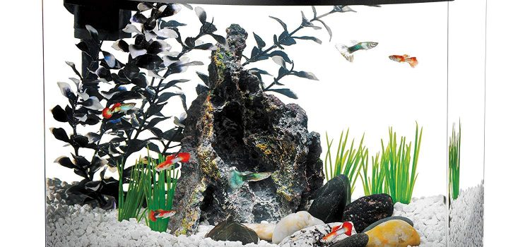 This Is How Many Fish You Can Fit In A 5-Gallon Tank