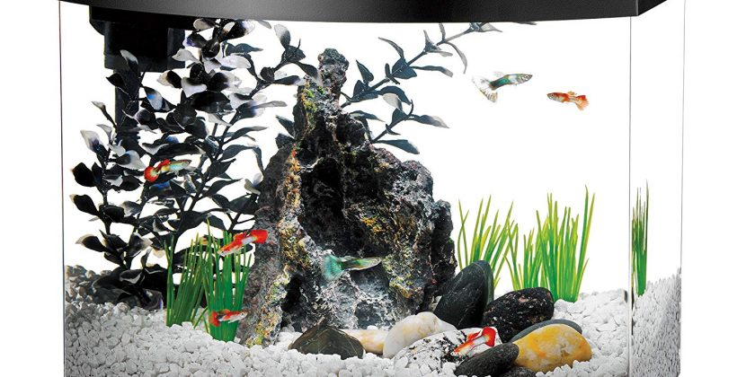 How Many Fish In A 5-Gallon Tank