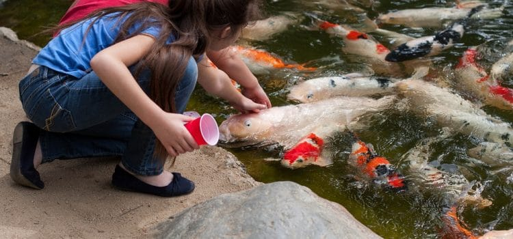 How To Get Fish To Adapt To Eating Habits
