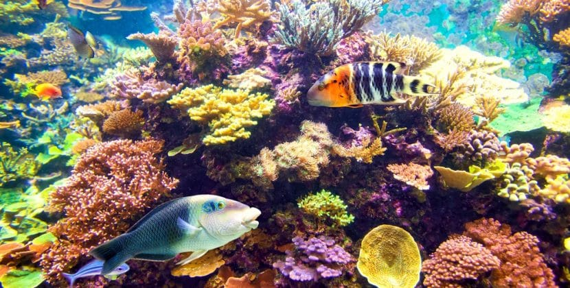 How To Keep Tropical Fish From Breeding