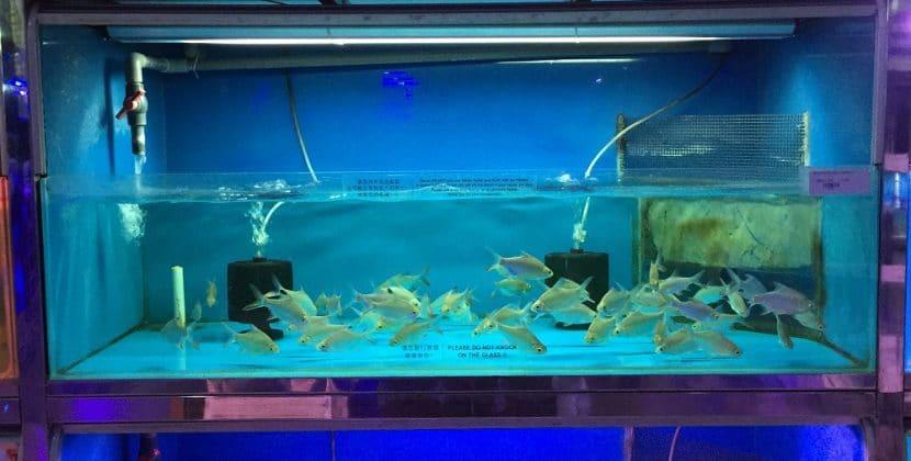 How To Make A Living Off Breeding Aquarium Fish