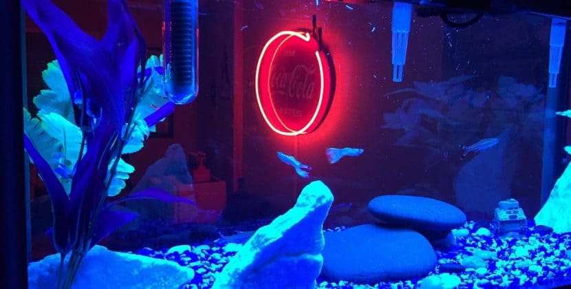 Things To Have To Start A Freshwater Aquarium