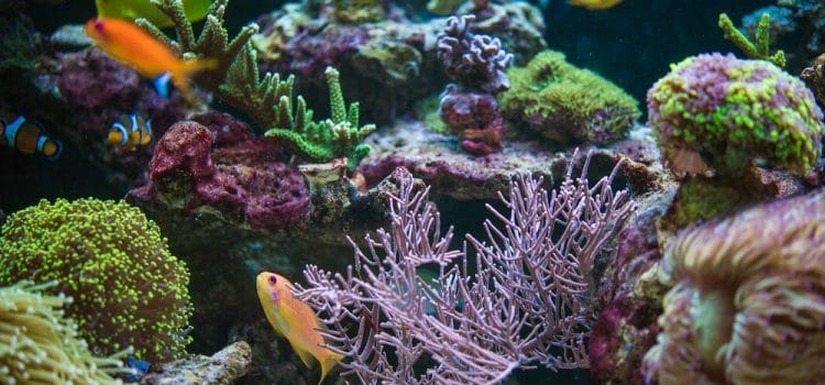 Things to Have to Start a Saltwater Aquarium