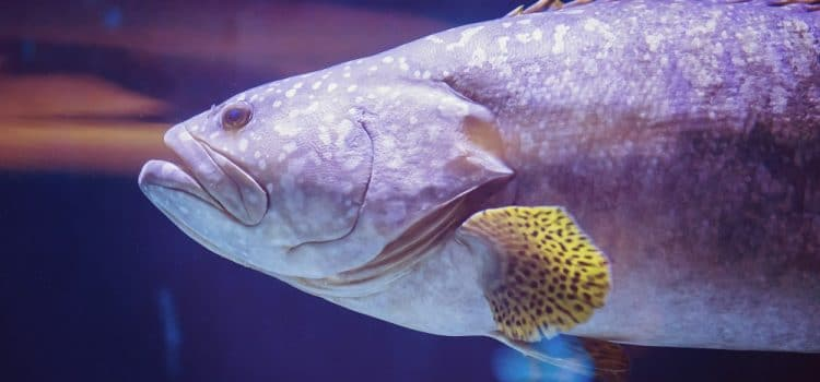 What Happens If The Fish Stops Swimming?