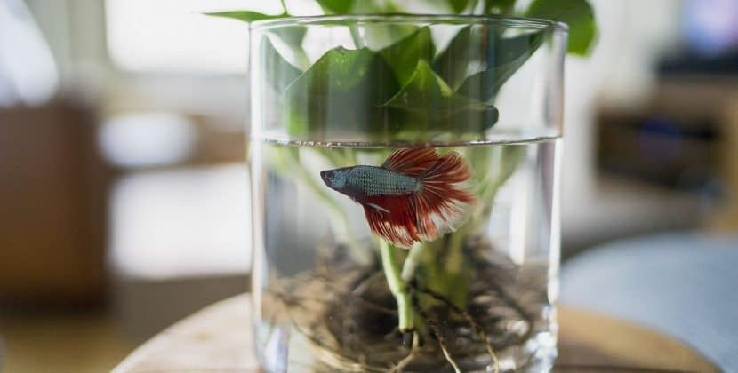 Why Is My Fish Tank Water Cloudy?