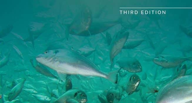 How Are Arctic Fish Affected By Climate Change?