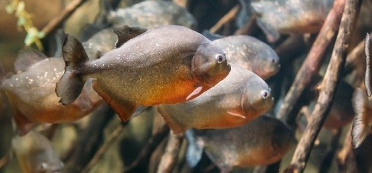 How Are Fish Adapted To Their Environment?