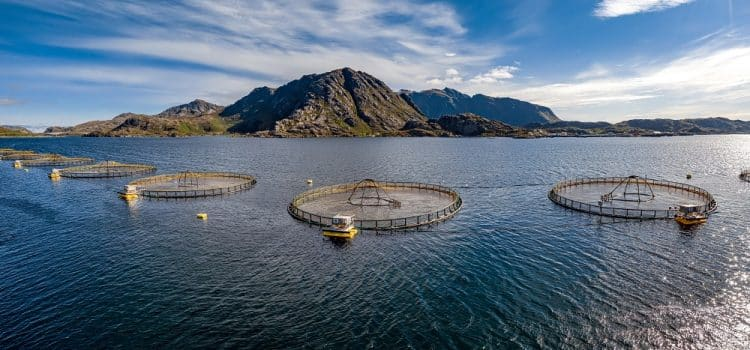 How Does Fish Farming Affect The Environment?