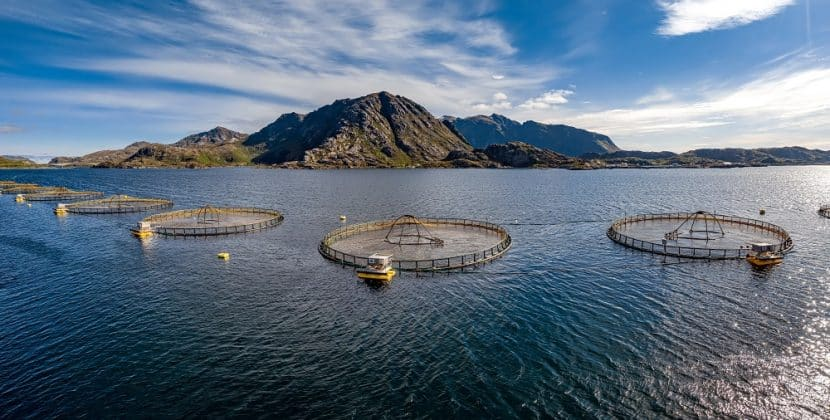 How Does Fish Farming Affect The Environment