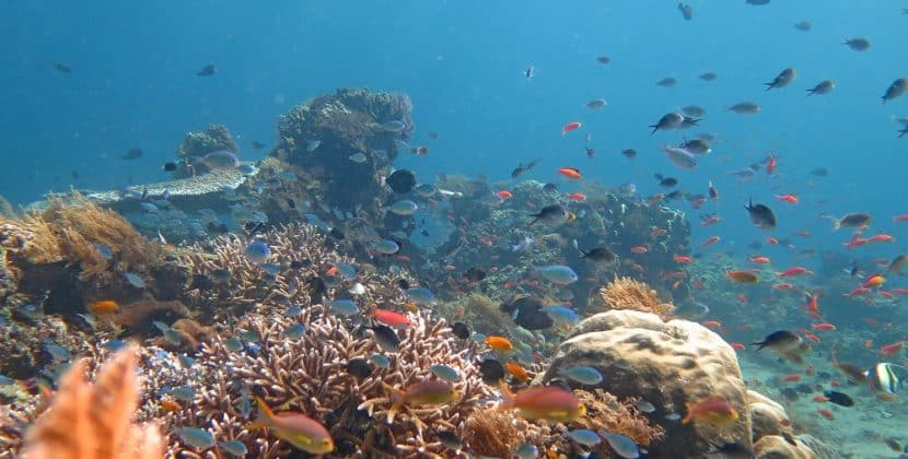 How Does The Declining Fish Population Relate To The Environment?