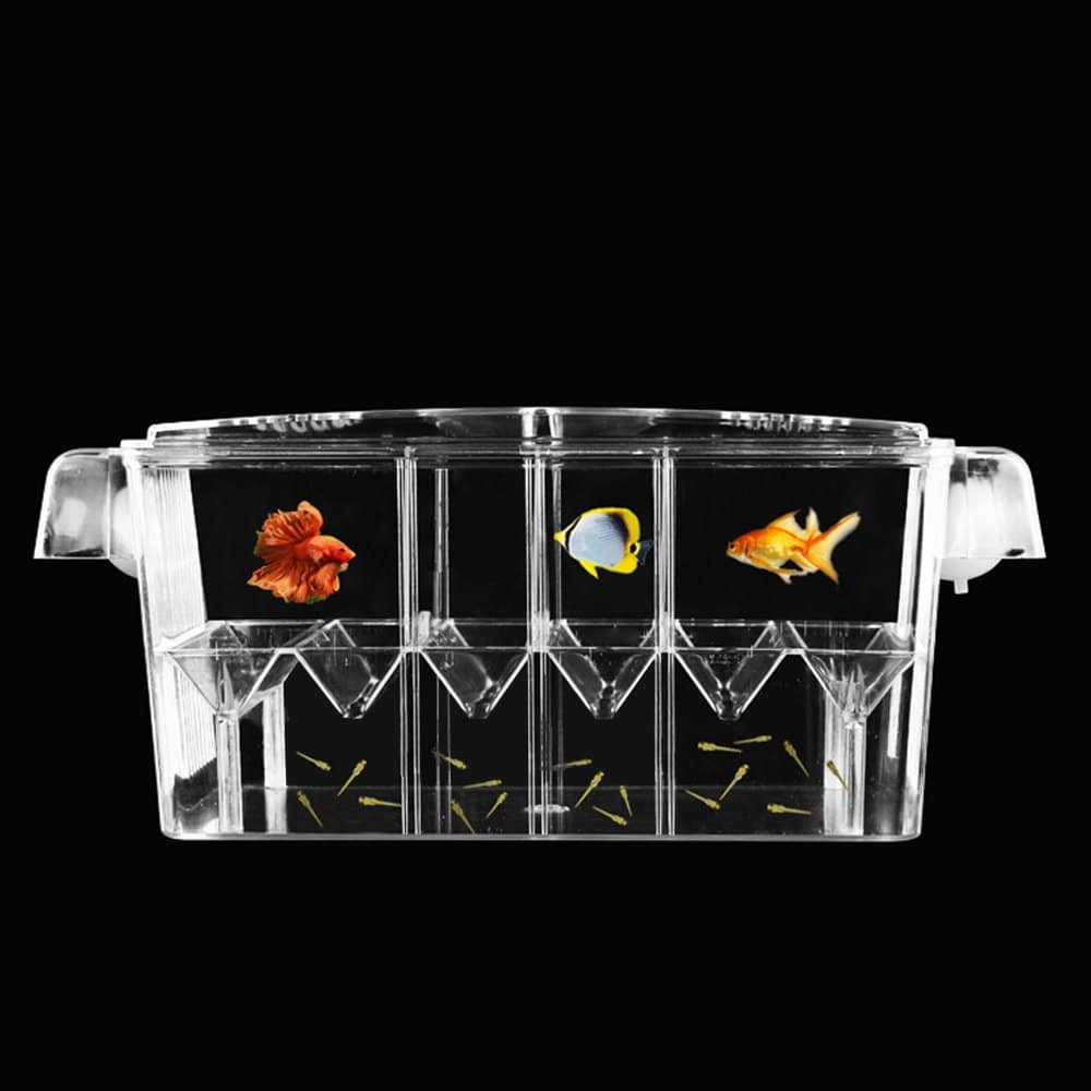 How To Start A Fish Breeding Business