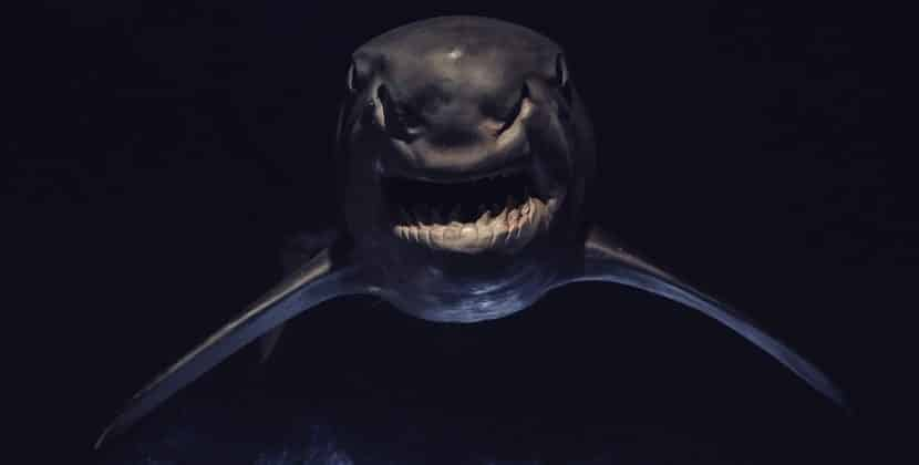 What Are The Eating Habits Of The Megamouth Shark