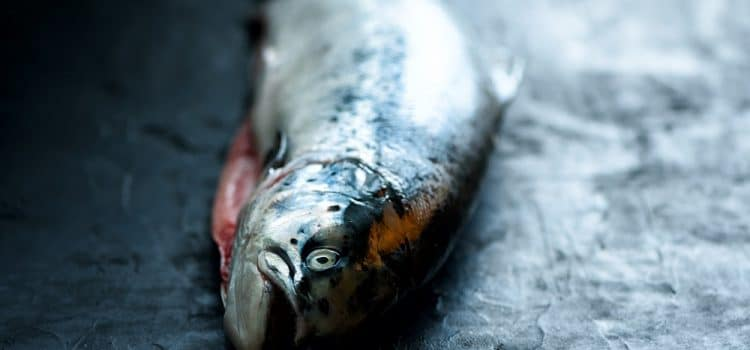 What Does Wild Caught Fish Mean?