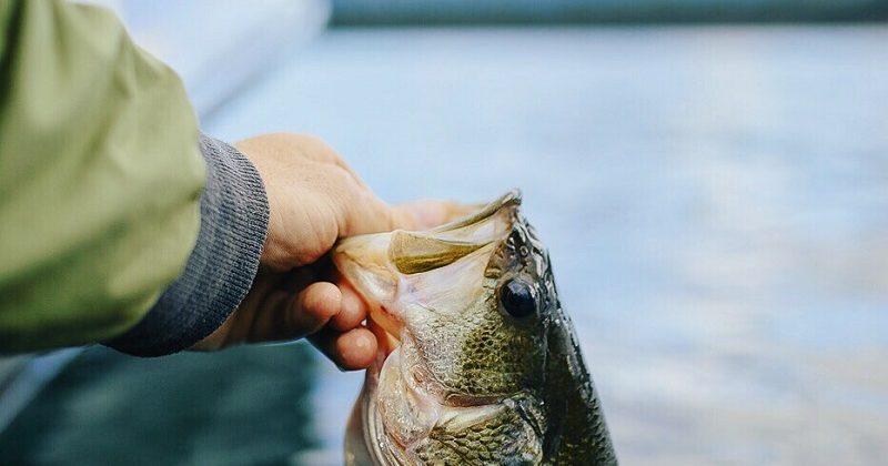 What Fish Are In Australia