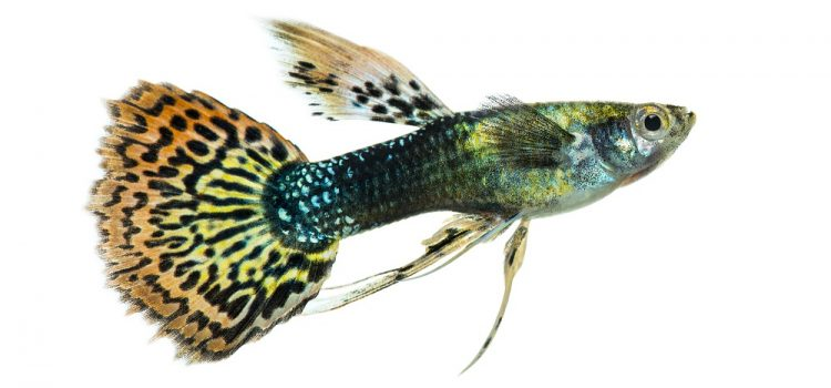 What Is The Most Profitable Fish To Breed?