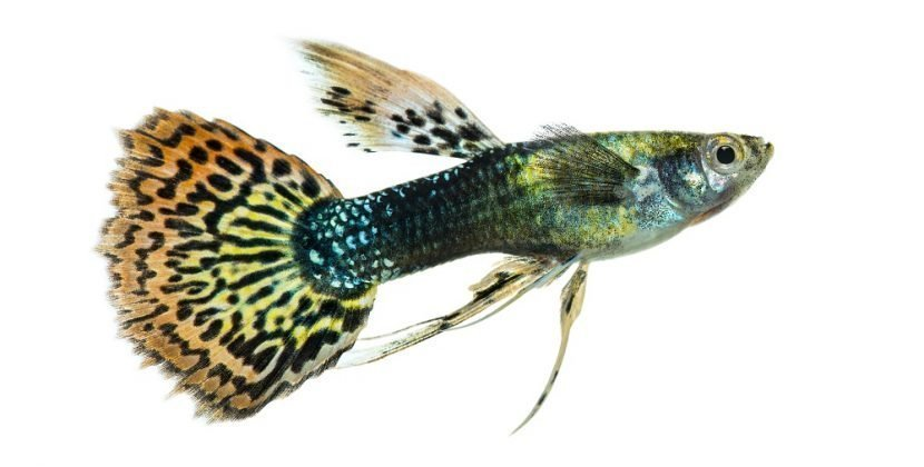What Is The Most Profitable Fish To Breed