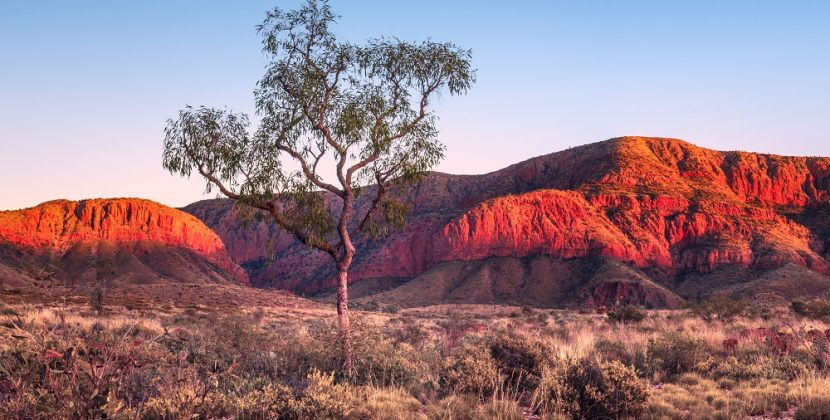What Types Of Fish Are Native To Alice Springs, Australia?