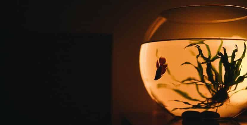 Where Do Betta Fish Live In Their Natural Environment