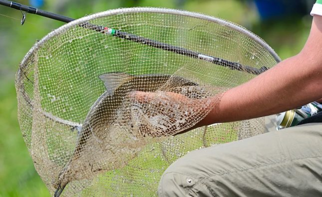 Best Fly Fishing Net