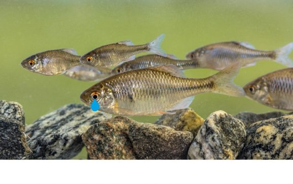 Do Fish Have Tears