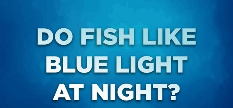 This Is Why You Should Have A Blue Light For Your Fish