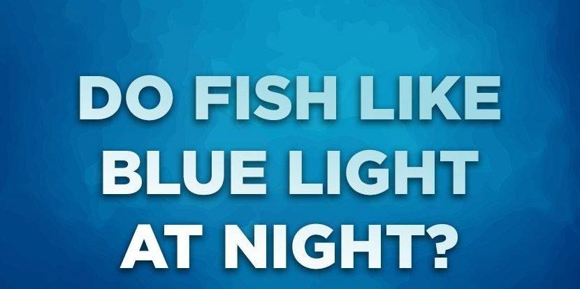 Do Fish Like Blue Light At Night?