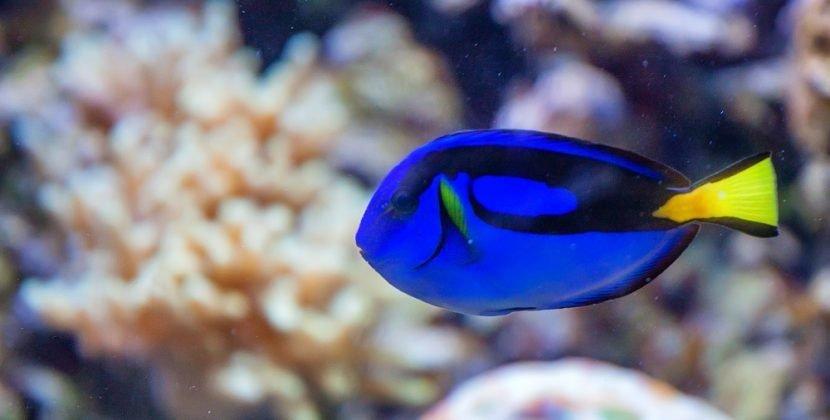 Do Fish Like the Dark
