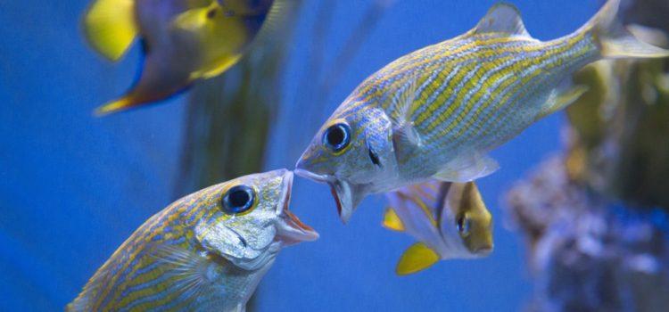 How Do Fish Breed In An Aquarium?