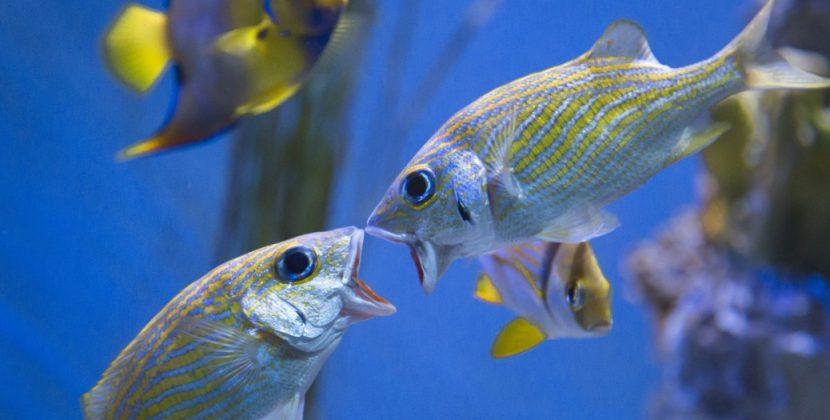 How Do Fish Breed In An Aquarium