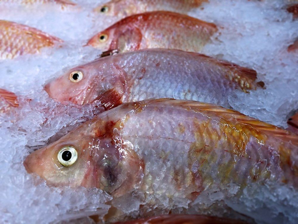 How Long Does Fish Last In The Freezer