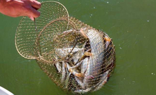 What Is the Best Fishing Net