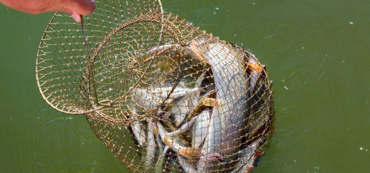 What Is the Best Fishing Net?