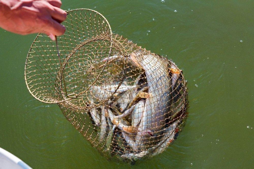 SAMSFX Fishing Floating Handle Dip Net Minnow Bait Nets
