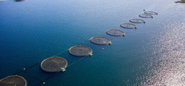 Which Region Uses Fish Farming In India?