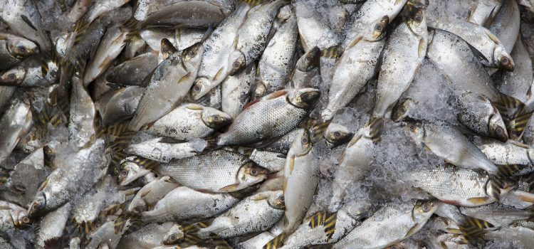 Does Fishing Harm The Environment?