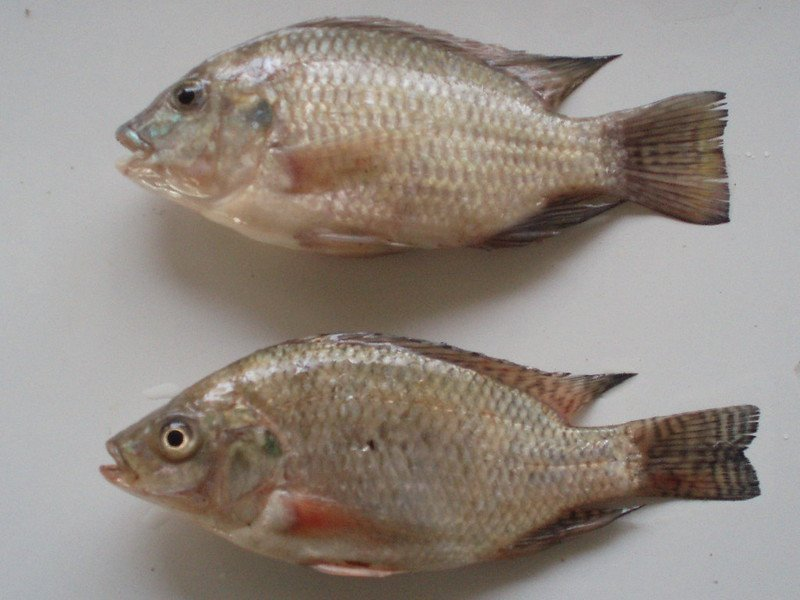 What Are The Different Kinds of Fish In The Philippines?