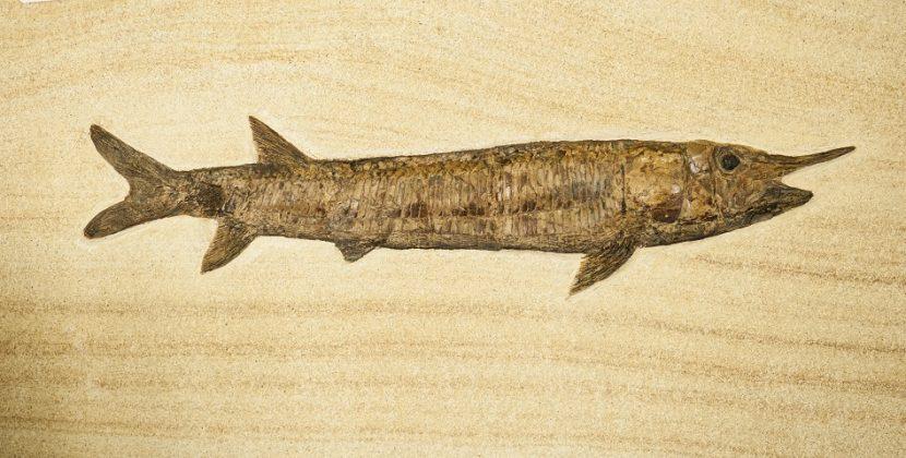 How Many Fish Are Extinct?