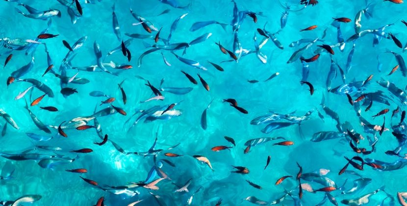 How Many Fish Are Still Alive?