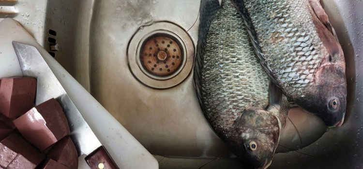 Do You Have To Clean Fish Before Cooking?