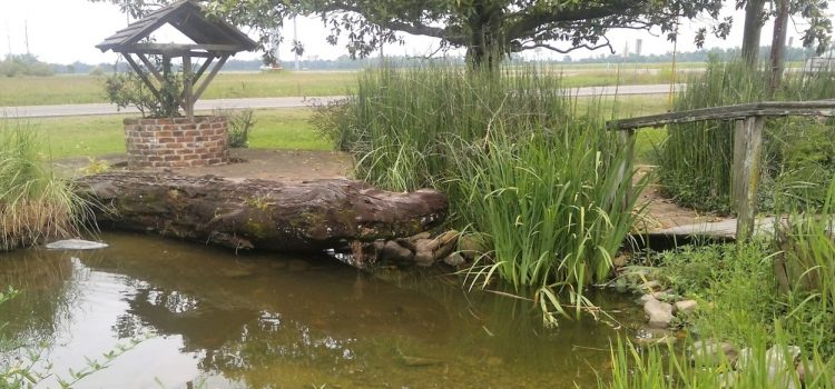 How Do You Make Pond Water Safe For Fish?