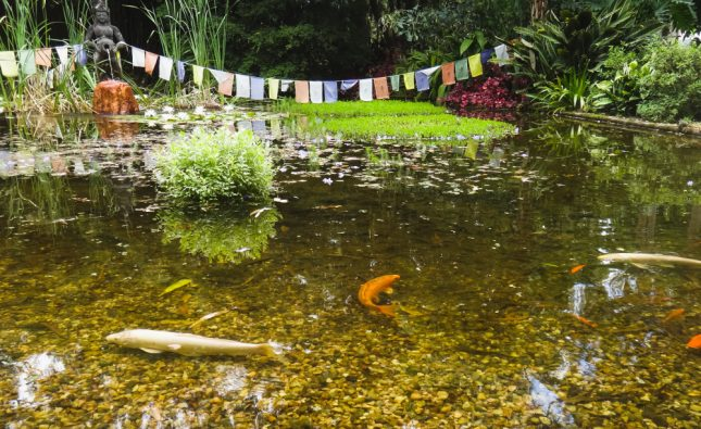 Why Do Fish Stay At Bottom Of The Pond?