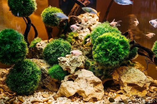 Be Careful Using New Gravel In Your Tank: Do These Things First