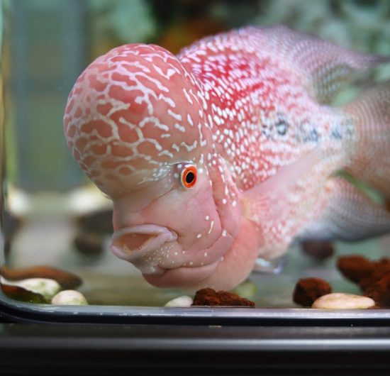 Aquariums Needing Gravel: Might Be Not What You Think