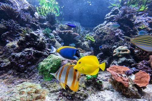 Fish In The Ocean | Evolutionary History & MORE